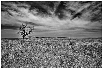 Bare-tree-bw