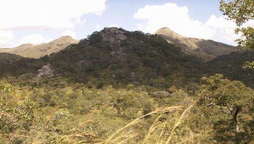 Zimbabwe-bush