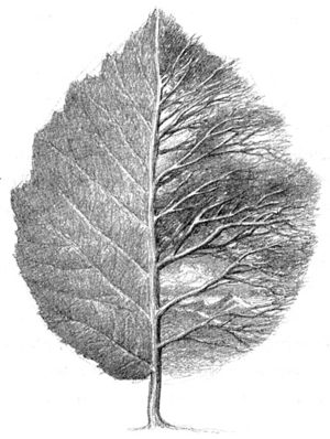 Alan Lee - Leaf By Niggle